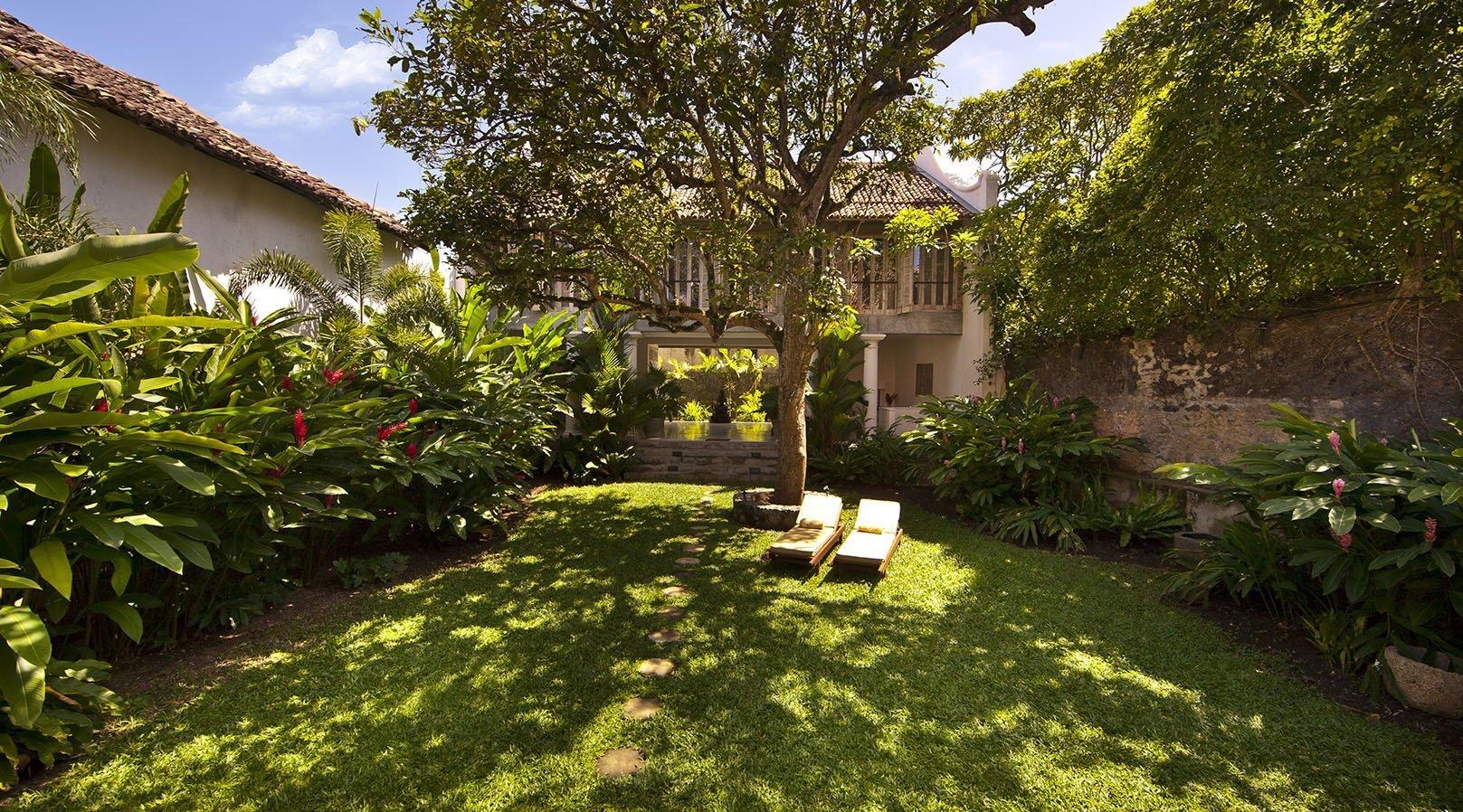 mango tree garden